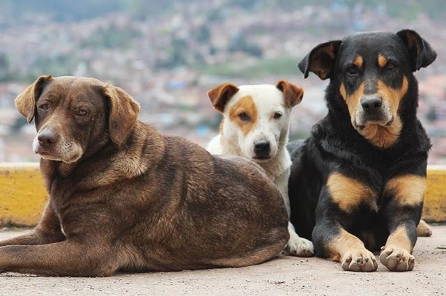 Καταδικάστηκε σε 28 χρόνια φυλάκισης επειδή σκότωσε 7 σκυλιά