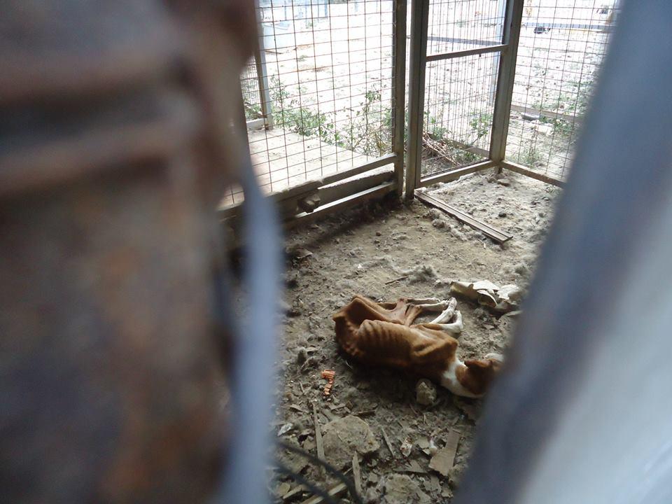 Χιλιάδες ζώα σαπίζουν στα κυνοκομεία. Υιοθετήστε ένα!