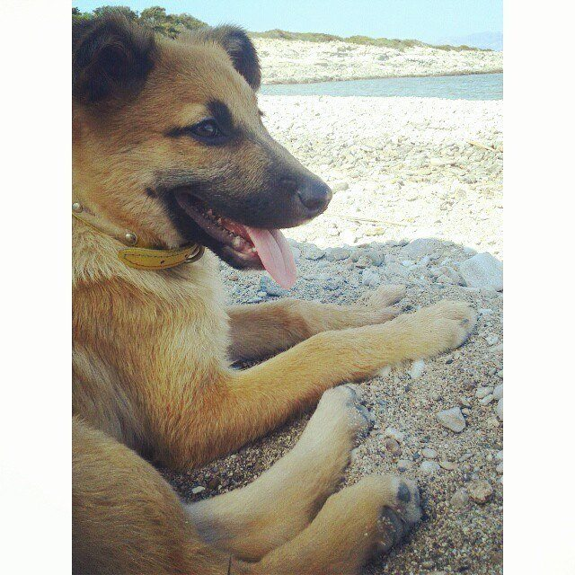Χάθηκε σκυλίτσα στη Βούλα