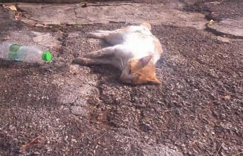 Εικόνες ντροπής στην Α. Γλυφάδα: Σκότωσαν γάτες με φόλες