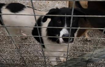 Τα νεκρά σκυλιά κοστίζουν στο Δήμο Βόλου τη θέση για Πολιτιστική Πρωτεύουσα 2021