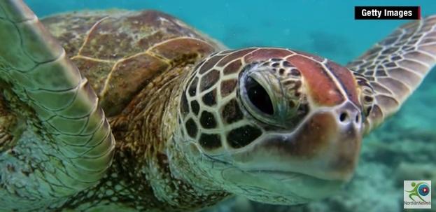 Ανακάλυψαν θαλάσσια χελώνα που...φωσφορίζει