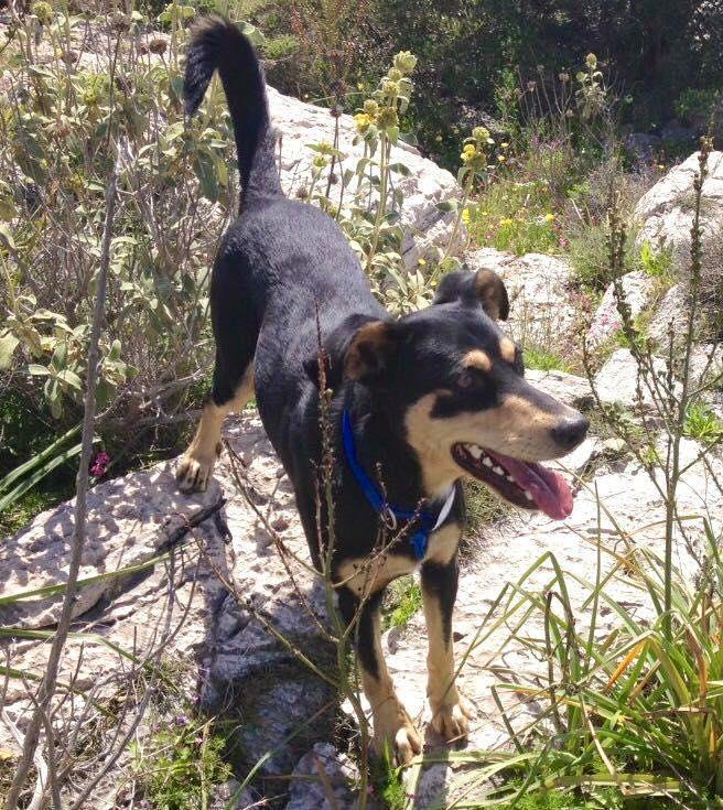 Χάθηκε σκύλος στη Βουλιαγμένη
