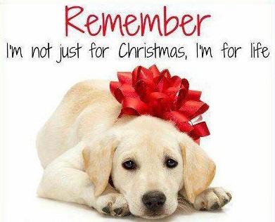 Καλά Χριστούγεννα, χωρίς τετράποδα...δώρα