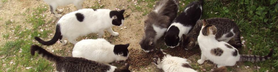 Αδέσποτες γάτες: πώς μπορείτε να τις βοηθήσετε