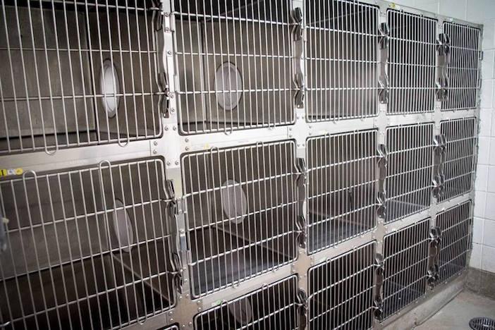 Σικάγο: Χιλιάδες ζώα σώθηκαν χάρη σ' ένα αδέσποτο από την Κρήτη