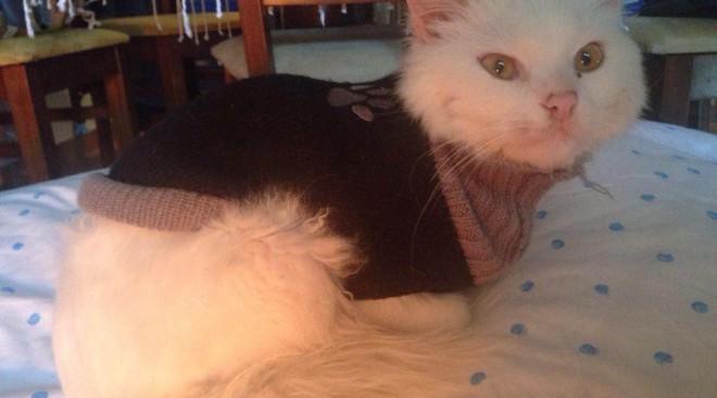 Απίστευτη ιστορία γάτου από το Ιράκ που έφτασε στη Λέσβο