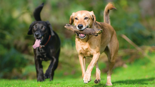 Ένα Πάρκο Σκύλων σύντομα στη Βούλα