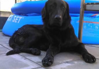Χάθηκε σκύλος από τη Βούλα