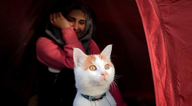 Ο Ταμπούς, ο γάτος-πρόσφυγας στην Ειδομένη