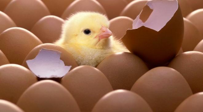 Κουνελάκια & κοτοπουλάκια: Γιατί δεν πρέπει να τα δωρίζουμε το Πάσχα στα παιδιά μας