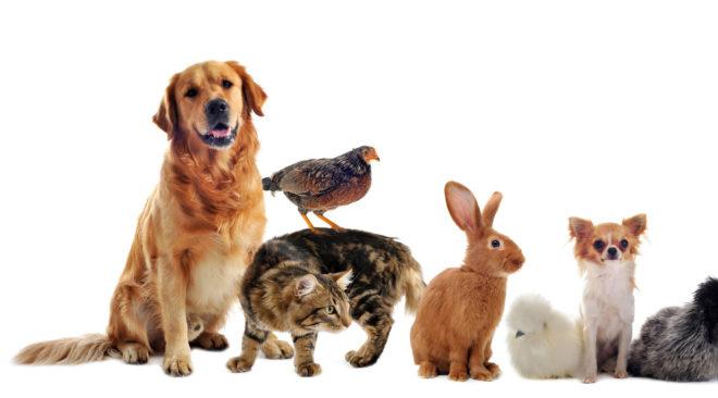 Αξεσουάρ και τροφές για το ζωάκι σας; Το καλύτερο pet shop online με 1 κλικ!