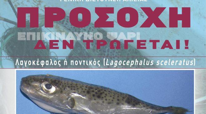 Προσοχή: Μην καταναλώνετε το ψάρι λαγοκέφαλο, είναι τοξικό!