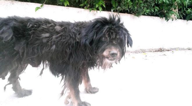 Καταγραφή των αδέσποτων σκυλιών σε Βάρη, Βούλα, Βουλιαγμένη