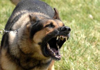 Σημείο κινδύνου για μικρόσωμα ζώα στη Βούλα