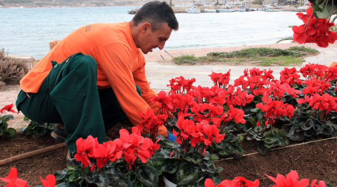 Φυτεύοντας κυκλάμινα στην Αθηναϊκή Ριβιέρα