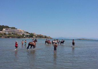 Εκδρομή στη Βραυρώνα για μπάνιο...με άλογα!