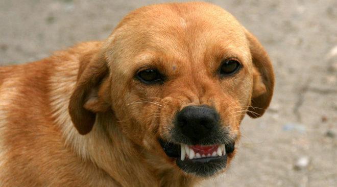 Βουλιαγμένη: Σκύλος δάγκωσε άνθρωπο και ο Δήμος τον αποζημίωσε