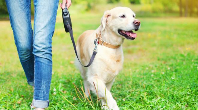5 βασικές συμβουλές για αγορές αξεσουάρ σκύλων