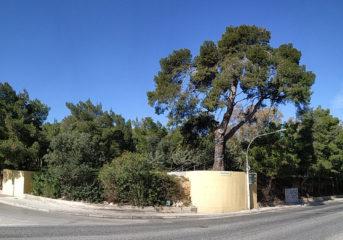 Βάρη Βούλα Βουλιαγμένη: 1 δέντρο κόβεται, 63 φυτεύονται