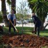 Μια ολυμπιακή ελιά στο Δημαρχείο Βάρης Βούλας Βουλιαγμένης