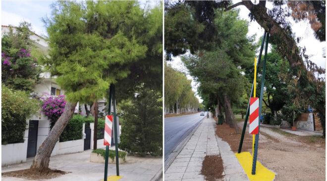 Βουλιαγμένη: Υποστύλωση δέντρων για να μην κοπούν
